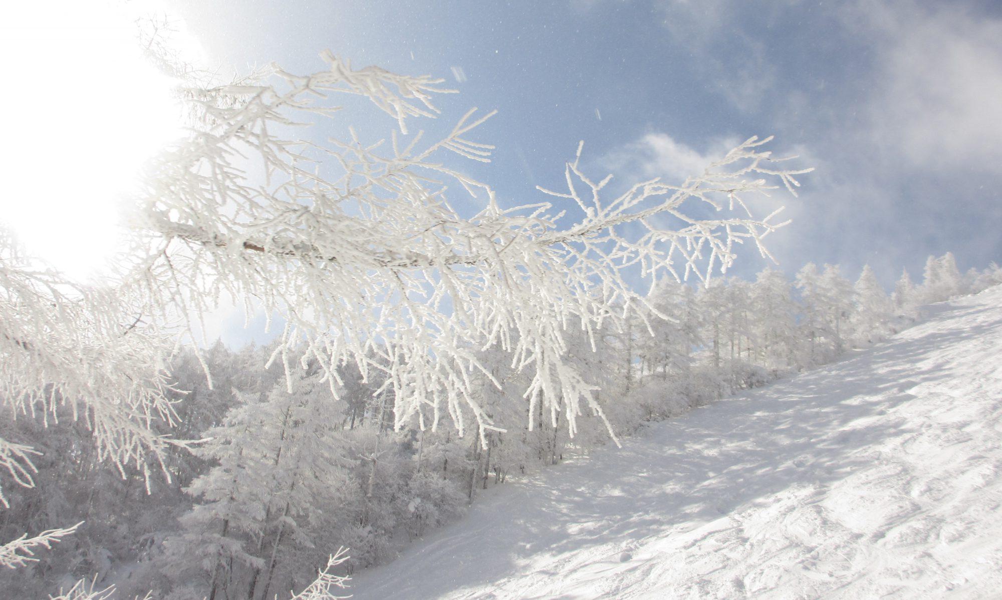 特定非営利活動法人 全日本聴覚障害スキー指導員会